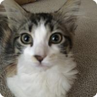 Adopt A Pet :: DARCIE - Bakersfield, CA
