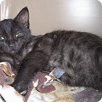Adopt A Pet :: HANK - Medford, WI