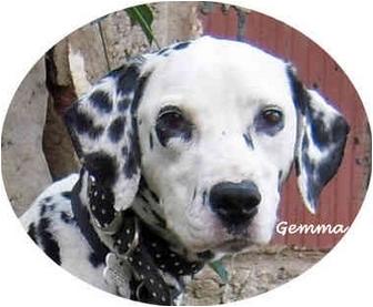 Dalmatian Dog for adoption in Mandeville Canyon, California - Gemma