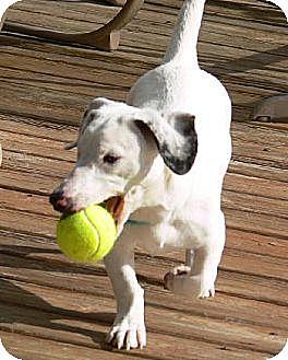 Dachshund Mix Dog for adoption in Pearland, Texas - Sammie
