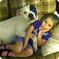 Adopt A Pet :: Anabelle - Flowery Branch, GA