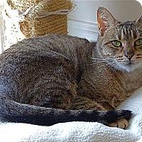 Adopt A Pet :: Moira - Victor, NY