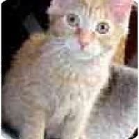 Adopt A Pet :: Scarlett - Arlington, VA