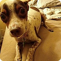 Adopt A Pet :: Cookie - Encinitas, CA