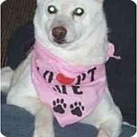 Adopt A Pet :: Tika- KS - Round Lake, IL