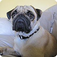 Adopt A Pet :: Felix - Eagle, ID