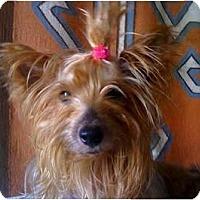 Adopt A Pet :: June Bug - Homestead, FL