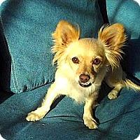 Adopt A Pet :: **Honey**Video** - Pasadena, CA
