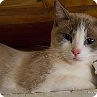 Adopt A Pet :: Simon - Bulverde, TX