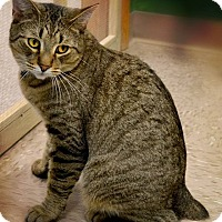 Adopt A Pet :: Braveheart - Byron Center, MI