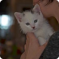 Adopt A Pet :: Esther Boy - Brooklyn, NY