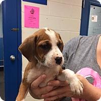 Adopt A Pet :: Jan - Barnegat, NJ