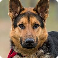 Adopt A Pet :: Brighton - Dacula, GA