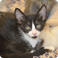 Adopt A Pet :: Checkers - San Leon, TX
