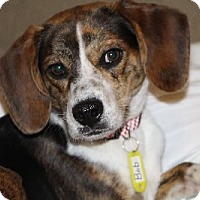 Adopt A Pet :: Bob - Avon, NY