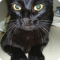 Adopt A Pet :: Amanda - Hamburg, NY