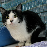 Adopt A Pet :: Teal - New Kensington, PA