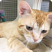 Adopt A Pet :: Austin - El Dorado Hills, CA