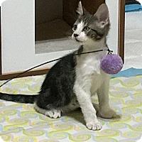 Adopt A Pet :: Pudding - Colorado Springs, CO