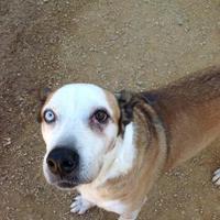 Adopt A Pet :: Lowell - Fairfax Station, VA