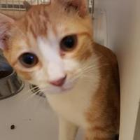 Adopt A Pet :: Hercules - Brownwood, TX