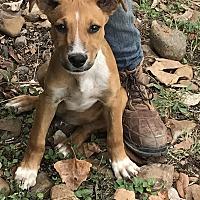 Adopt A Pet :: Jack - East Hartford, CT