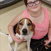 Adopt A Pet :: Annabelle - Ogden, UT