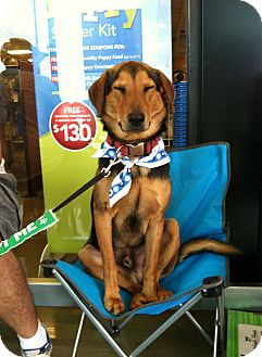 Hound (Unknown Type) Mix Dog for adoption in Baton Rouge, Louisiana - Will
