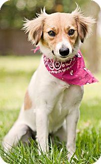 Terrier (Unknown Type, Medium) Mix Dog for adoption in Portsmouth, Rhode Island - Frannie-LOCAL!