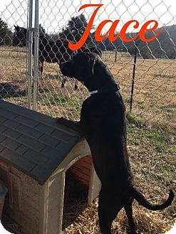 Border Collie/Labrador Retriever Mix Dog for adoption in Shady Point, Oklahoma - Jace