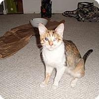 Adopt A Pet :: Jezebel - Chicago, IL