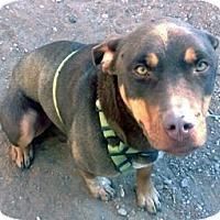 Adopt A Pet :: Duke - Santa Fe, NM