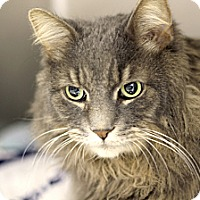 Adopt A Pet :: Tedward - Chicago, IL