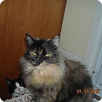 Adopt A Pet :: Anna - Riverside, RI