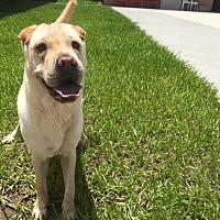 Adopt A Pet :: Louise - Myakka City, FL
