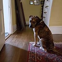 Adopt A Pet :: Gordon - Bath, ME