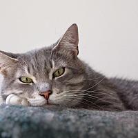 Adopt A Pet :: Juan - Wayne, NJ