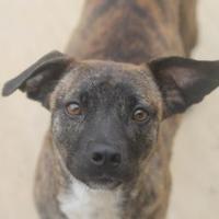 Adopt A Pet :: Misty - Savannah, TN