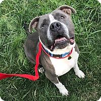 Adopt A Pet :: Marco - Chico, CA