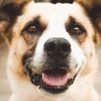 Adopt A Pet :: Freddie - New Freedom, PA
