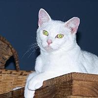 Adopt A Pet :: Barry - Ashland, VA