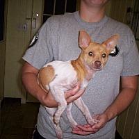 Adopt A Pet :: Pinta - Aurora, IL