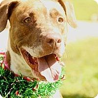 Adopt A Pet :: Eleanor - Honolulu, HI