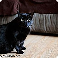 Adopt A Pet :: Azalea - Whitewater, WI