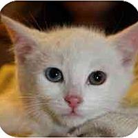 Adopt A Pet :: Frosty - Markham, ON
