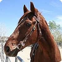 Adopt A Pet :: Clue Me In - Pinon Hills, CA