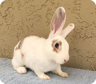 Other/Unknown Mix for adoption in Bonita, California - Evin