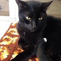 Adopt A Pet :: Berry - Hudson, FL