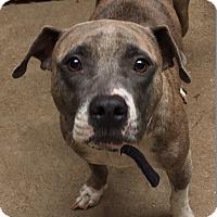 Adopt A Pet :: Jemma - St. Louis, MO