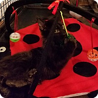 Adopt A Pet :: Santana - Geneseo, IL